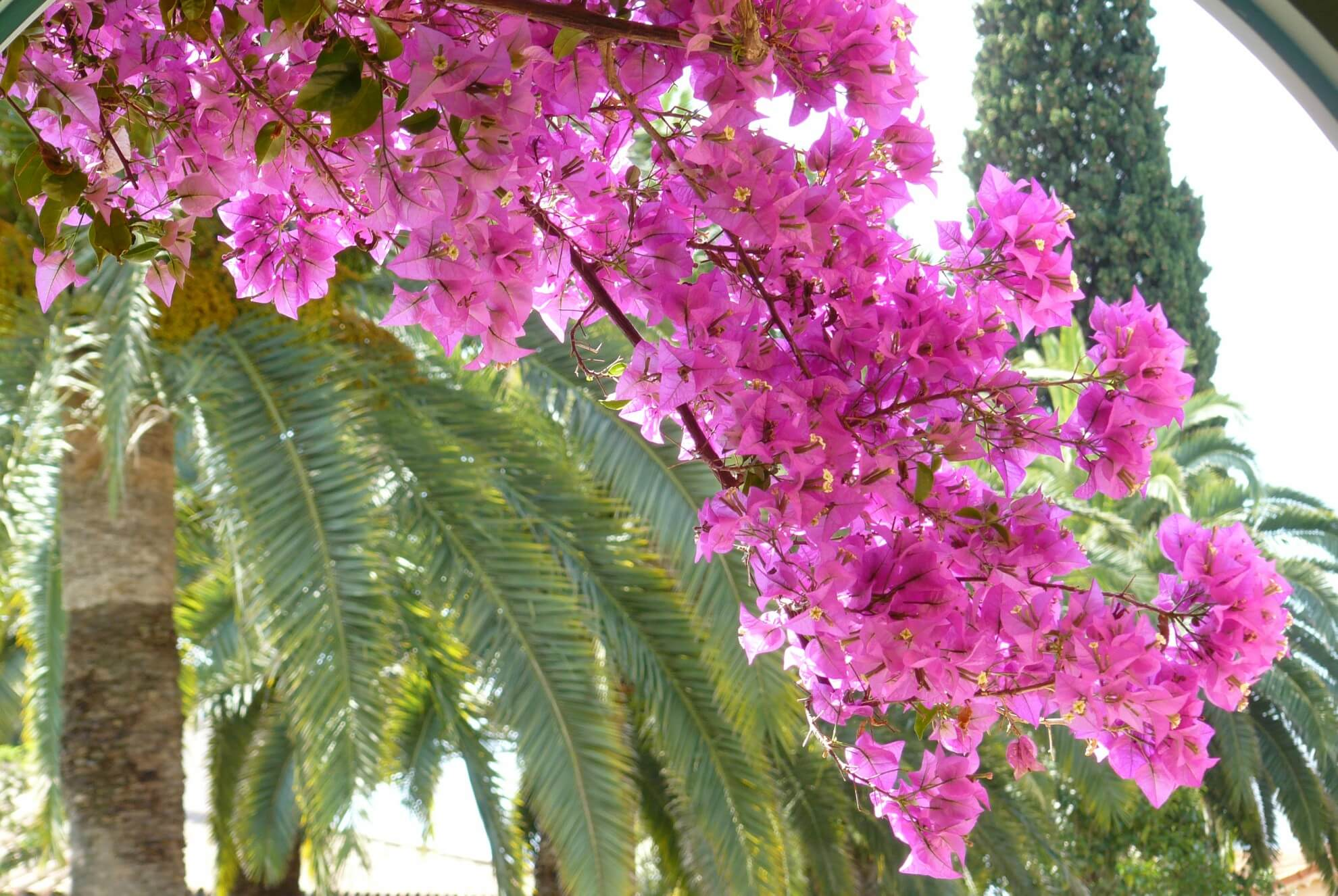 Jardins-Fragonard-le-jardin10